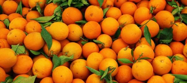 taronjes-menjadors-escolars
