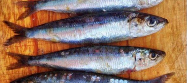 3 raons per menjar peix blau aquest estiu
