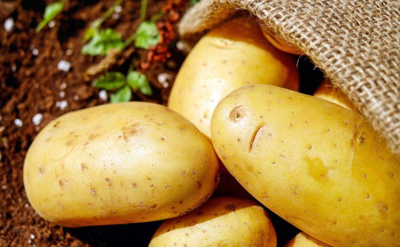 La patata, estrella de l'hivern
